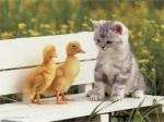 """Sosteniamo """"gli amici dell'arca"""""""
